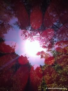 IMG_9822  Solaris Modalis, SolarisModalis, trees, sun, sky, orbs, geomagnetic storm, todays sun, sun today, rays, red, transmissions, nature spirits, inspiration