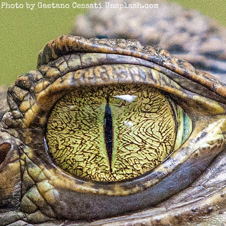 The Reptilians Departure From Earth, An Interesting Story
