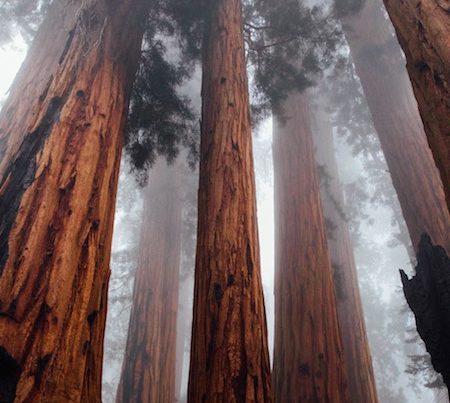 zero point, soul connection, redwoods